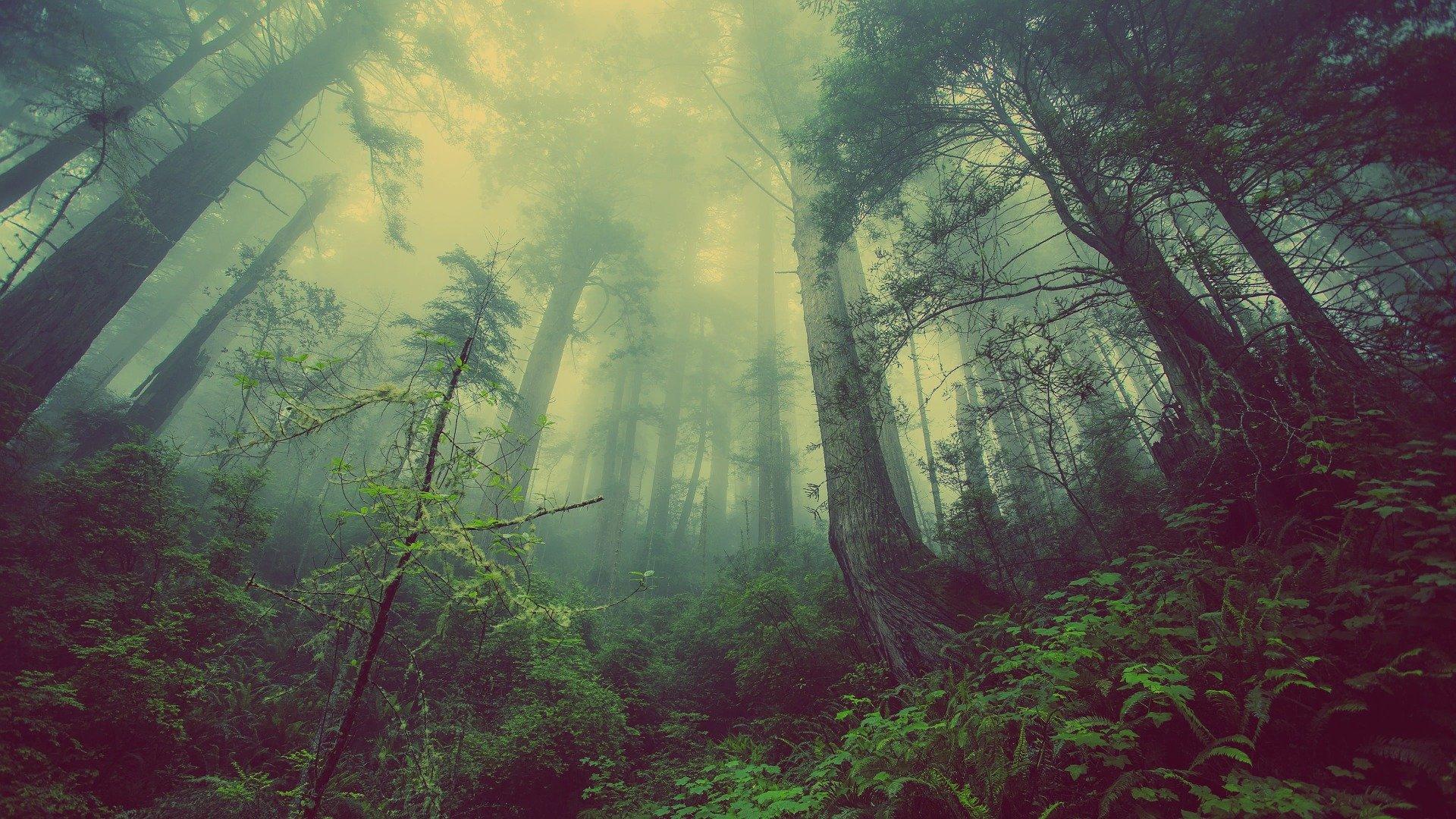 Medi Ambient i Boscos