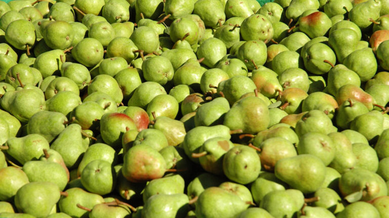 Sector de la fruita. Peres de Lleida